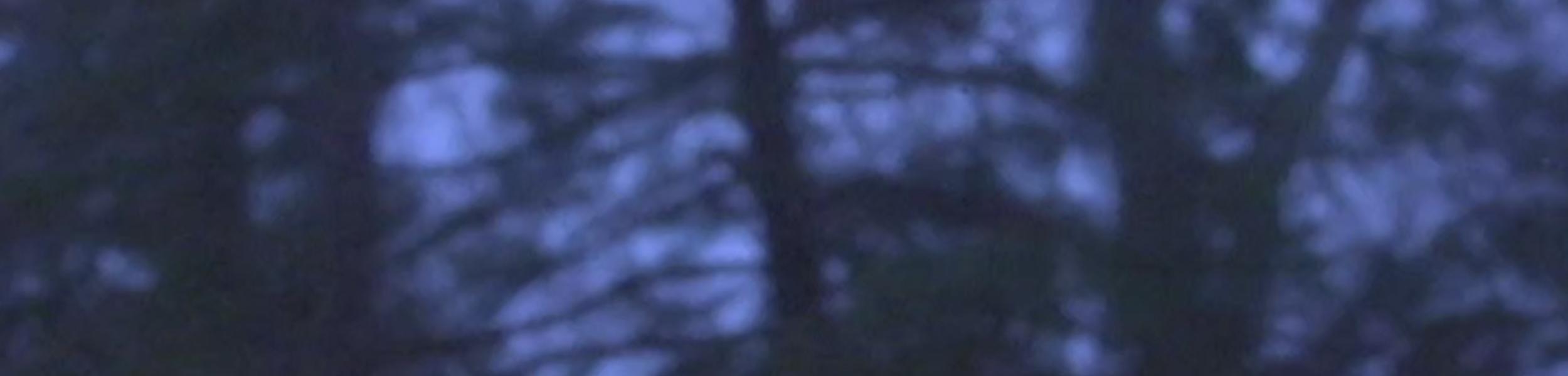 Adrianne Lenker - 'dragon eyes' Out Now